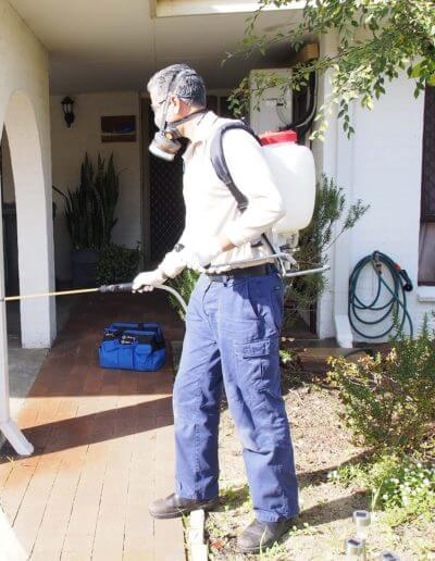Ant Control Perth | White Ant Treatment & Inspections Perth
