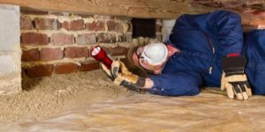 Effective and cheap pest control starts with early detection followed by expert intervention done by pros