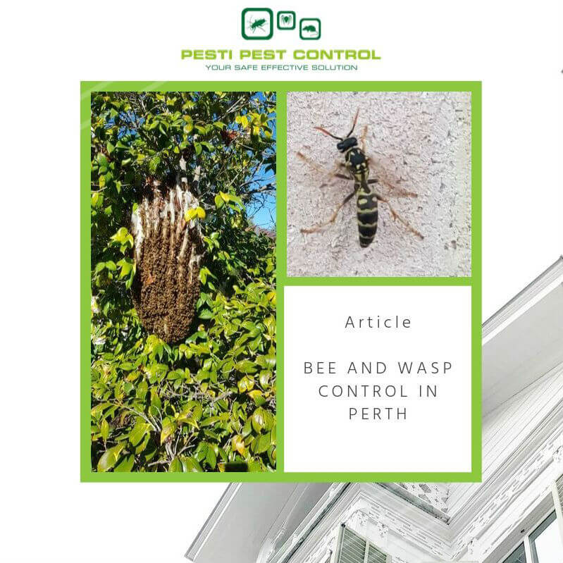 If you find any hives or nests in your area, be sure to report your sighting to us. We are your most reliable pest control services in Perth. We facilitate safe and efficient bee and wasp control and removal to ensure your neighbourhood stays bug-free.
